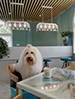 宠物酒店照片6