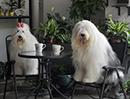 宠物酒店照片2