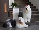 宠物酒店照片1